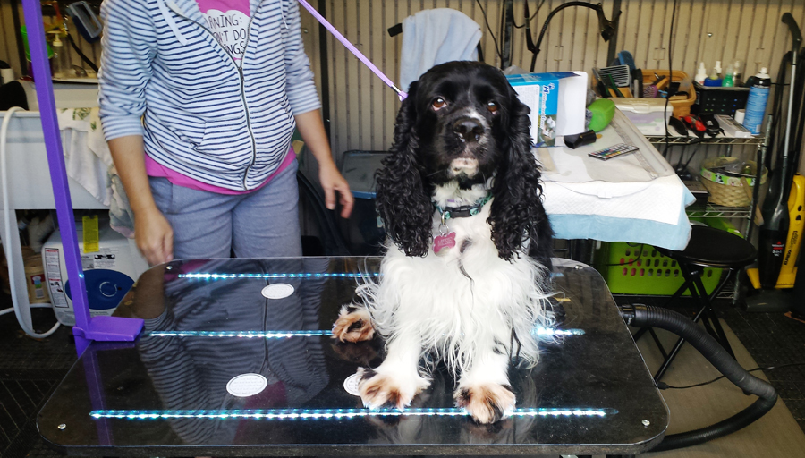 Lighted Pet Grooming Table